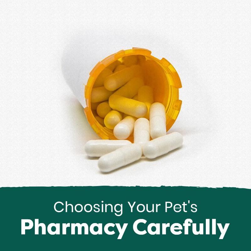 Choose Your Pet's Pharmacy Carefully