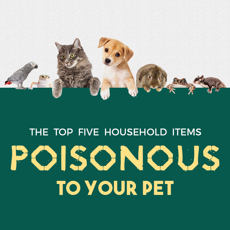 Poisonous to Your Pet