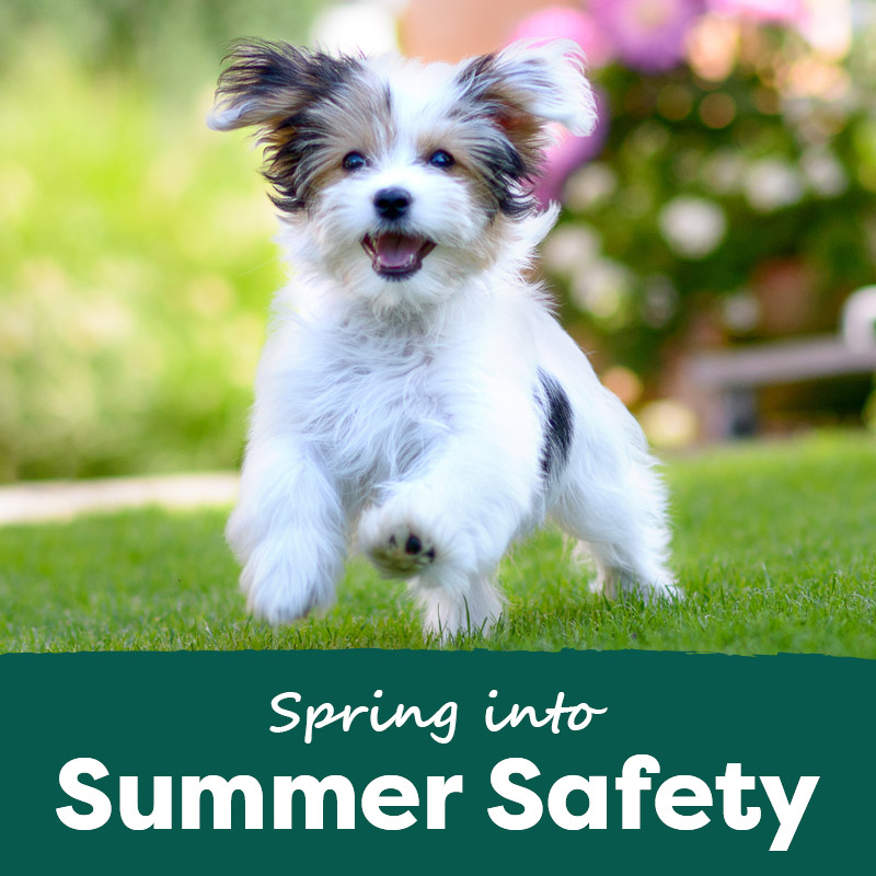 Spring into Summer Safety