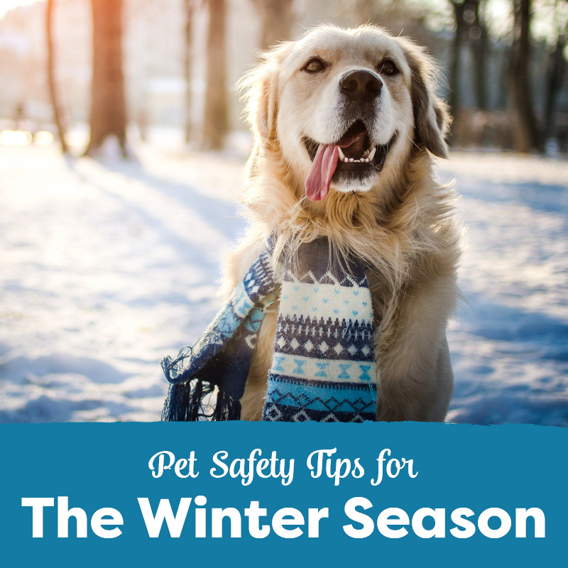 Pet Safety Tips for the Winter Season