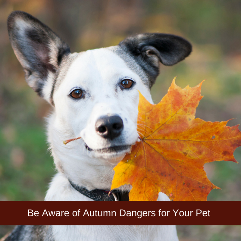 autumn-dangers