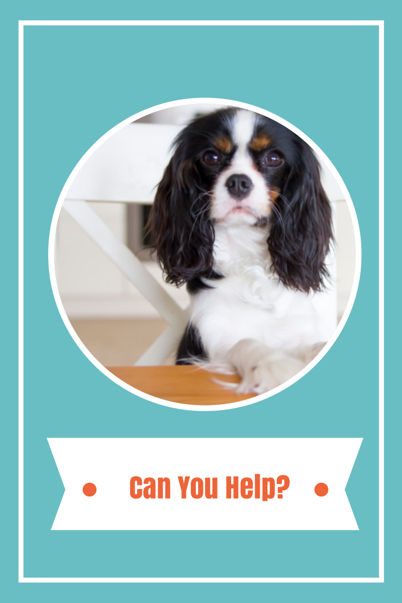 PET FOOD FOR THE FOOD SHELF!  CAN YOU HELP?