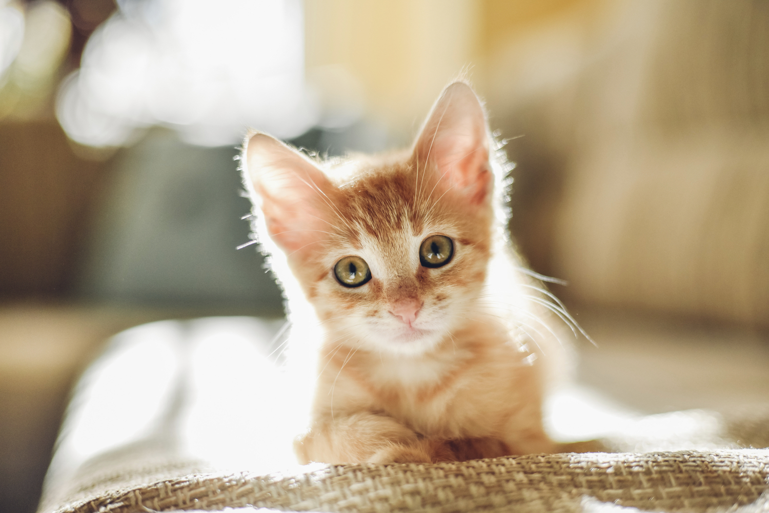 kitten-image-slider2
