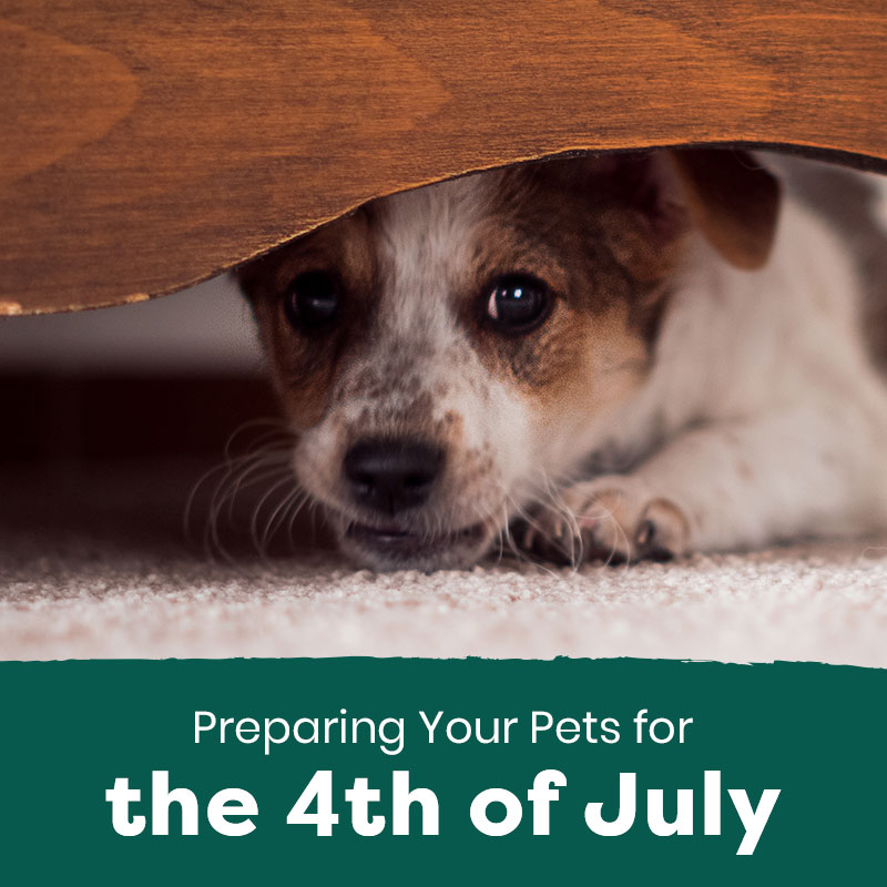 Preparing Your Pets for the 4th of July